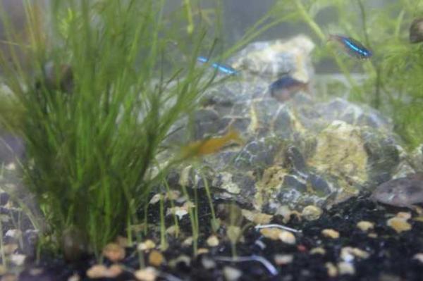 简单打造生态鱼缸